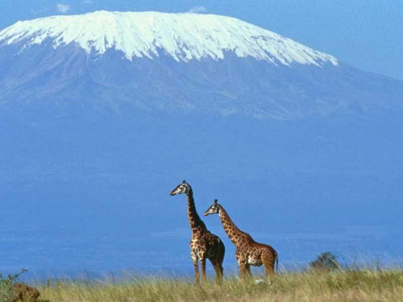 Mount Kilimanjaro Climbing, Trekking, Hiking in Tanzania